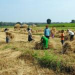 खेती: स्वरोजगार