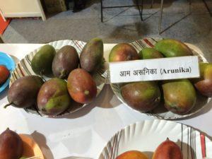 Arunica-Mangoes