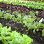cluster-farming