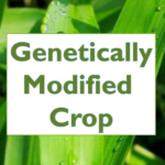 Genetically Modified Crops(source-https://www.slideshare.net)
