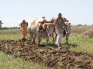 मिट्टी की उर्वरकता में सुधार-मिट्टी का स्वास्थ्य कार्ड भूमि संरक्षण और सूक्ष्म पोषक तत्व