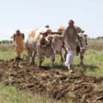 मिट्टी की उर्वरकता में सुधार