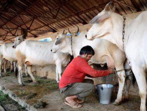 DairyFarming